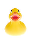 The duck Stock Image