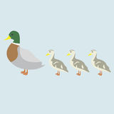 Duck and 3 cute duckling Royalty Free Stock Images