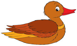 Duck. Vector clip-art / animal character for your design Royalty Free Stock Photography