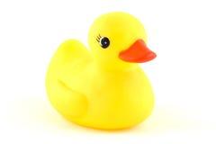 Free Duck Stock Photos - 7834193