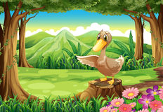 A duck above the stump at the forest vector illustration