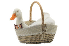 Duck. In a basket on a white background stock images
