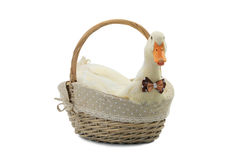 Duck. In a basket on a white background stock image