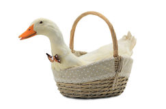 Duck. In a basket on a white background royalty free stock photos
