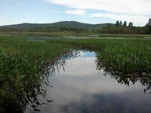 Duck Bay Lizenzfreie Stockfotos