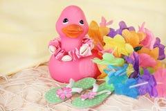 Duck on Beach Stock Photography