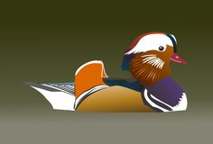 Duck 2. Beautiful colorful duck swimming on water royalty free illustration