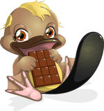 Duck-bill. Small duck-bill who eats a chocolate bar stock illustration