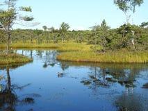 Duck bird in Aukstumalos swamp lake, Lithuania Stock Image