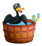A duck and a bird at the bathtub Royalty Free Stock Image