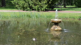 Duck bird swim in lake with fountain spalsh in summer park stock video