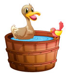 A duck and a bird taking a bath Stock Photo