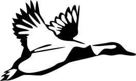 Duck. Black and white illustration of the flying duck Stock Photography