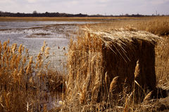 Duck Blind. In the marsh that leads to Delaware Bay Stock Photography