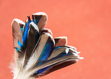 Duck blue feathers Stock Photos