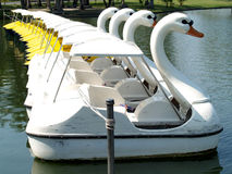 Swan boat 6 Stock Photography