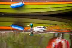 Duck and boat abstract reflection Stock Images