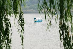 Duck boat on lake beyond green tree leaves Stock Photography