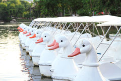 Duck boat Stock Images