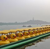Duck boats in Beihai Park in Beijing. Beihai is a large park in central Beijing, People's Republic of China's capital. Beihai originally formed part of the royalty free stock image