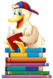 Duck and books Royalty Free Stock Photo