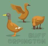 Duck Buff Orpington Cartoon Vector Illustration
