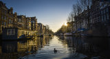 Duck in the canal of amsterdam Stock Photos
