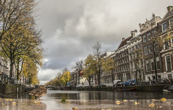 A duck by a canal, Amsterdam. Royalty Free Stock Photo