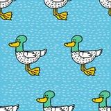 Duck cartoon pattern. Drake drawing ornament. Bird background.  Stock Photography