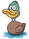 Duck cartoon Stock Image