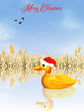 Duck at Christmas Stock Image