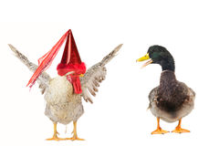 Duck and cock Royalty Free Stock Image
