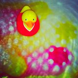 Duck Colour Bath de goma Imágenes de archivo libres de regalías