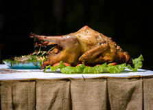 Duck cooked with apples on the table royalty free stock photography