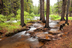 Duck Creek royalty free stock photo