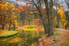 Duck Creek. Autumn park with golden trees and a pond with ducks Stock Photos