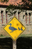 Duck Crossing stock photo