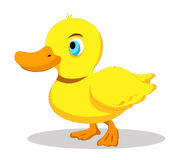 Duck so cute Stock Images