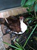 Duck de maman photos libres de droits