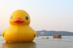 Duck Debuts en caoutchouc géant dans Pékin Images libres de droits