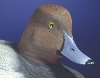 Duck Decoy. Hand carved duck decoy stock photo