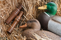 Duck decoy with stuffed and calls Royalty Free Stock Photo