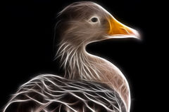 Duck Digital Painting Royalty Free Stock Image