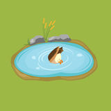 Duck dives into the pond isometric vector Stock Images