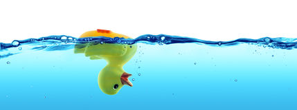 Duck Drowned - Failure Stock Photos