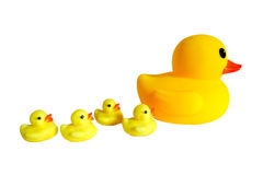Duck and ducking Stock Images