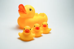 Duck and duckling Stock Photos