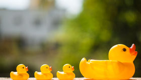 Duck and duckling. Ducklings and a duck on bokeh background royalty free stock images