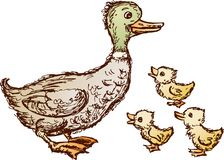Duck and ducklings Stock Image