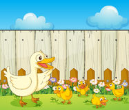 A duck and ducklings inside a fence Royalty Free Stock Photos